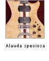 Alauda speciosa
