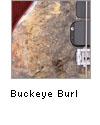 Buckeye Burl