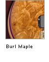 Burl Maple