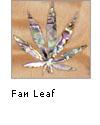 Fan Leaf