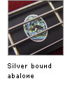 Silver bound abalone